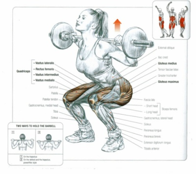 muscles worked in squat