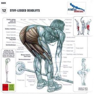 stiff legged deadlifts muscles