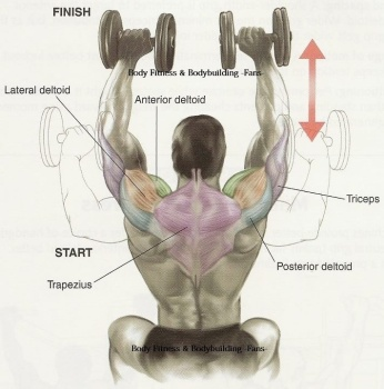 dumbbell shoulder press muscles