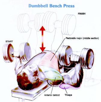dumbbell bench press muscles worked